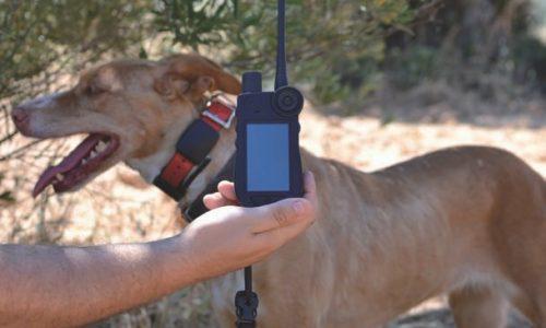 Collar GPS SportDOG Tek 2.0. La más avanzada tecnología para nuestro perro