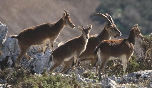 Cotos-de-caza-capacidades-de-carga-de-los-ecosistemas-para-caza