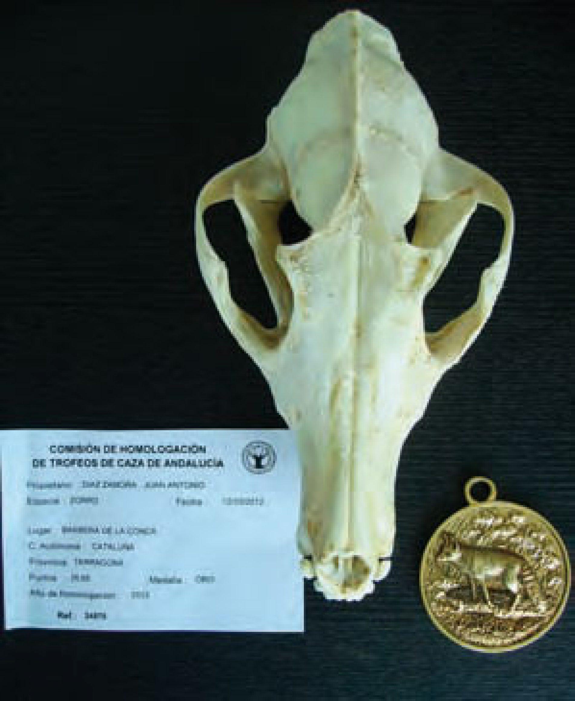 El zorro, la revalorización de una especie