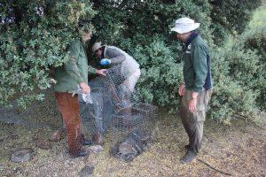 caza menor nacional - entrevisa a tomás merchan sanchez