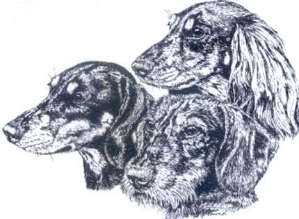 perros-razas-home-teckel