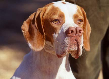 perros-razas-home-pachon-navarro