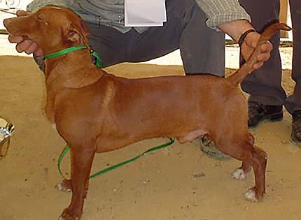 perros-razas-home-maneto