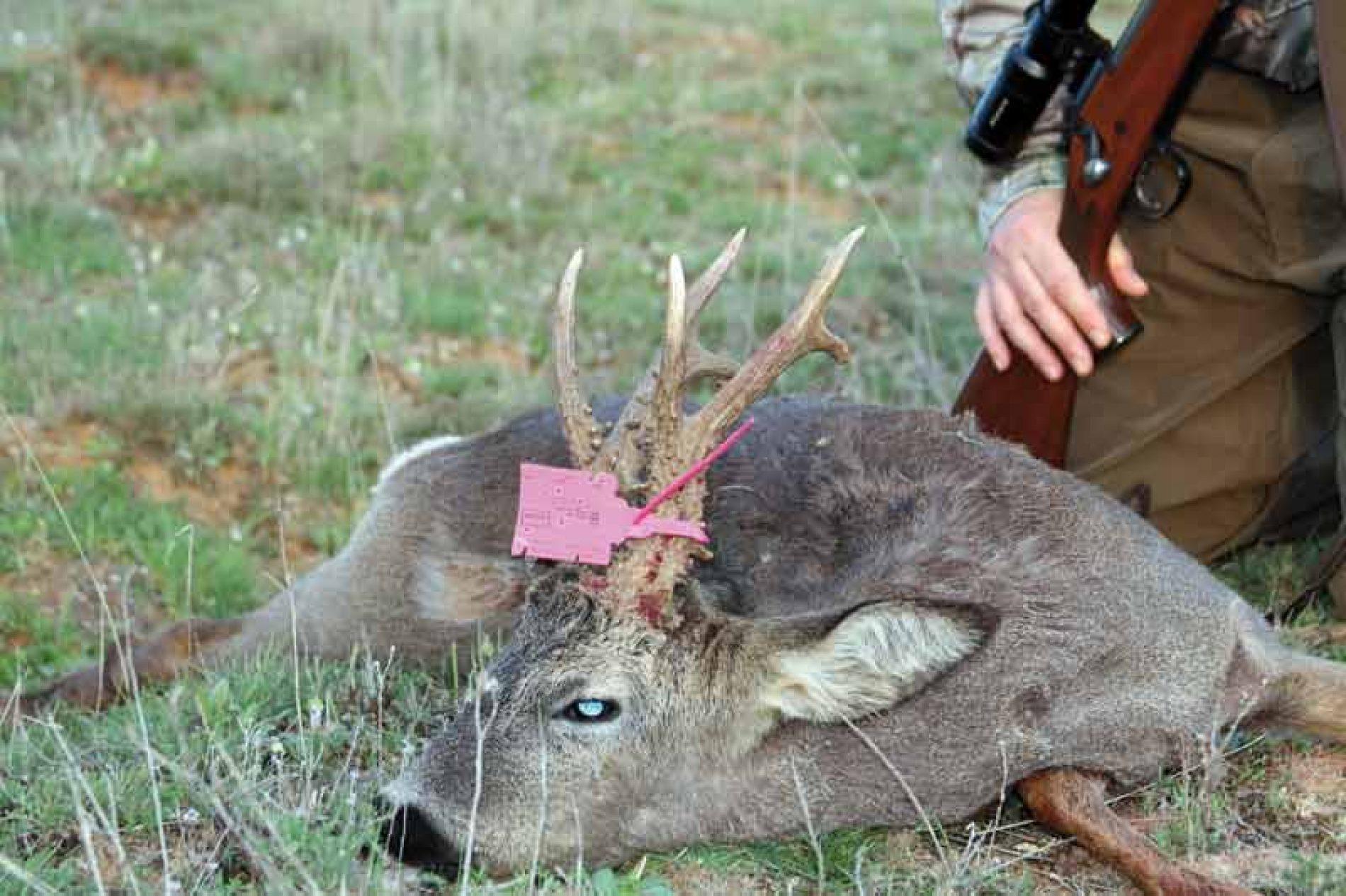Fedexcaza denuncia que cazadores, sociedades y empresas no han recibido los precintos de recechos y esperas