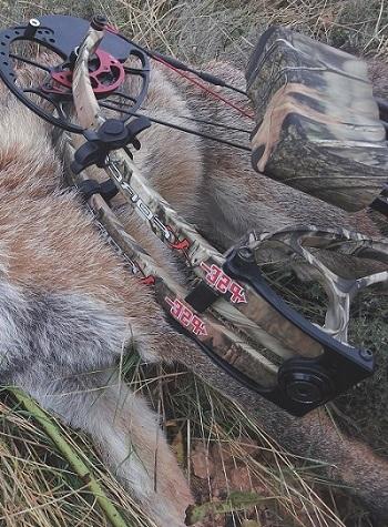 Caza-con-arco-reportajes-caza-de-zorros-con-arco-image4