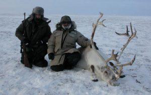 Caza-mayor-reportajes-internacional-caza-de-buey- almizclero-en-Canadá-5