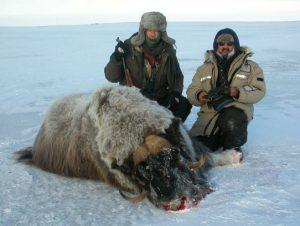 Caza-mayor-reportajes-internacional-caza-de-buey- almizclero-en-Canadá-6