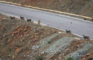 Caza-mayor-reportajes-nacional-caza-mayor-en-zonas-urbanas-image6