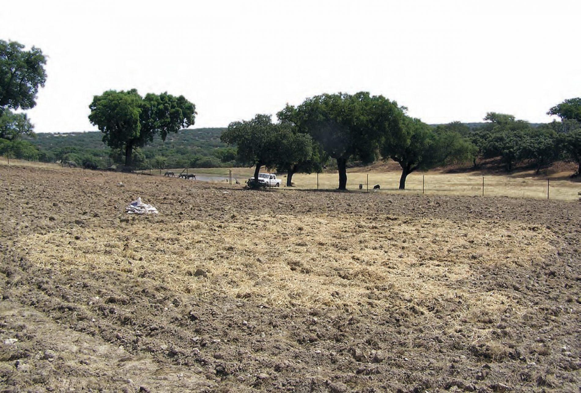 Los comederos ayudan a criar a las tórtolas