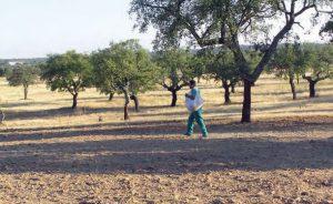 Caza-menor-reportajes-nacional-los-comederos-ayudan-a-criar-tortolas-9