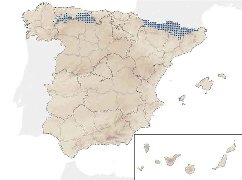 distribucion-rebeco