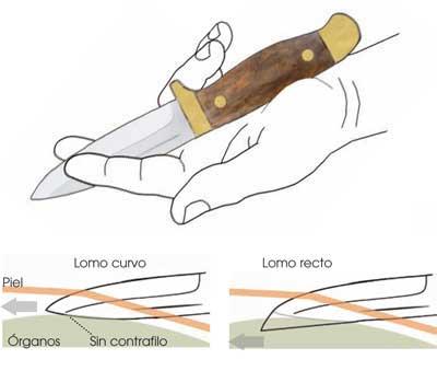 Eviscerado-corzo-cuchillo