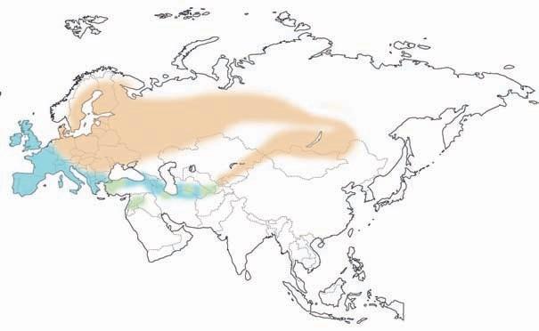 caza-menor-especies-zorzales-mapa.distribucion-euroasiatica-1