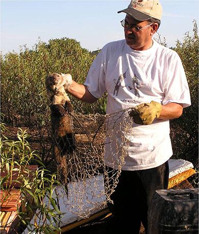 caza-menor-reportajes-nacional-planes-contra-los-danos-de-los-conejos-a-la--agricultura-huron