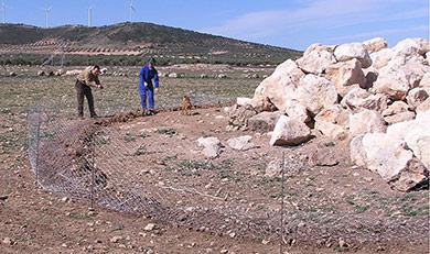 caza-menor-reportajes-nacional-planes-contra-los-danos-de-los-conejos-a-la--agricultura-majano01