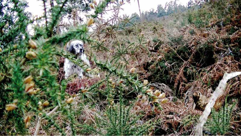 secretos-de-becada-perros