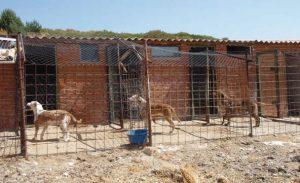Alojamiento del perro de caza trofeo caza - Pienso para perros de caza ...