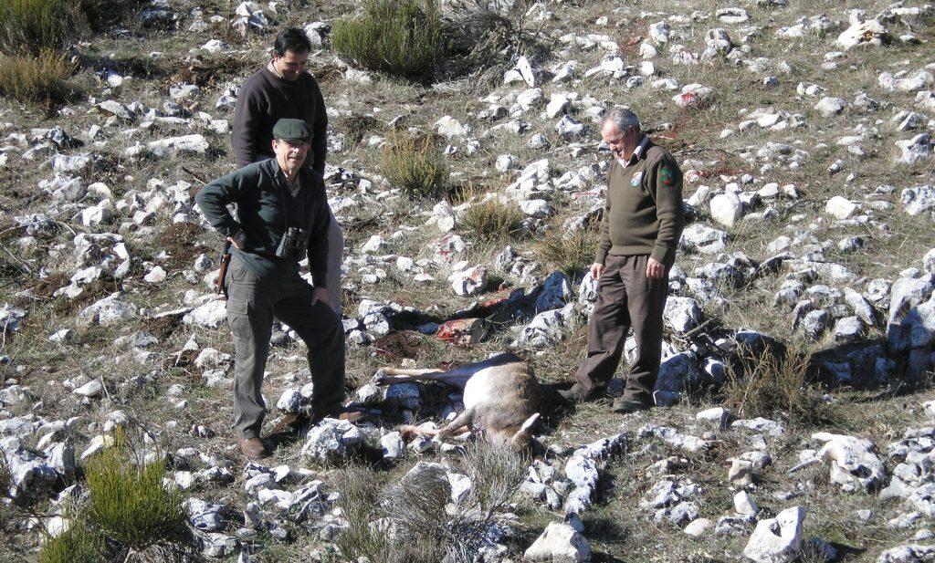 Cotos-de-caza-reportajes-caza-selectiva-en-los-cotos-de-caza