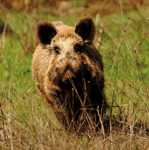 Cotos-de-caza-reportajes-caza-y-biodiversidad-45