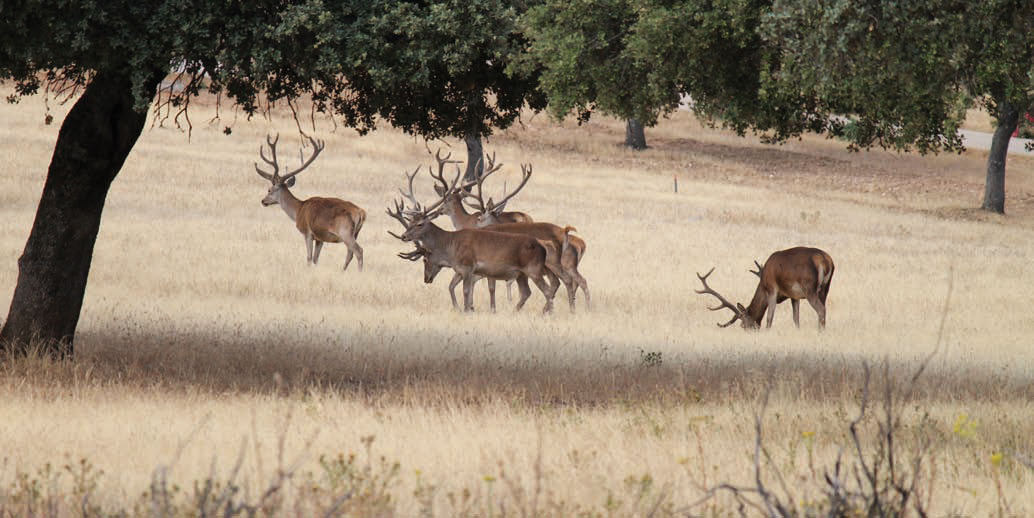 Cotos-de-caza-reportajes-caza-y-biodiversidad