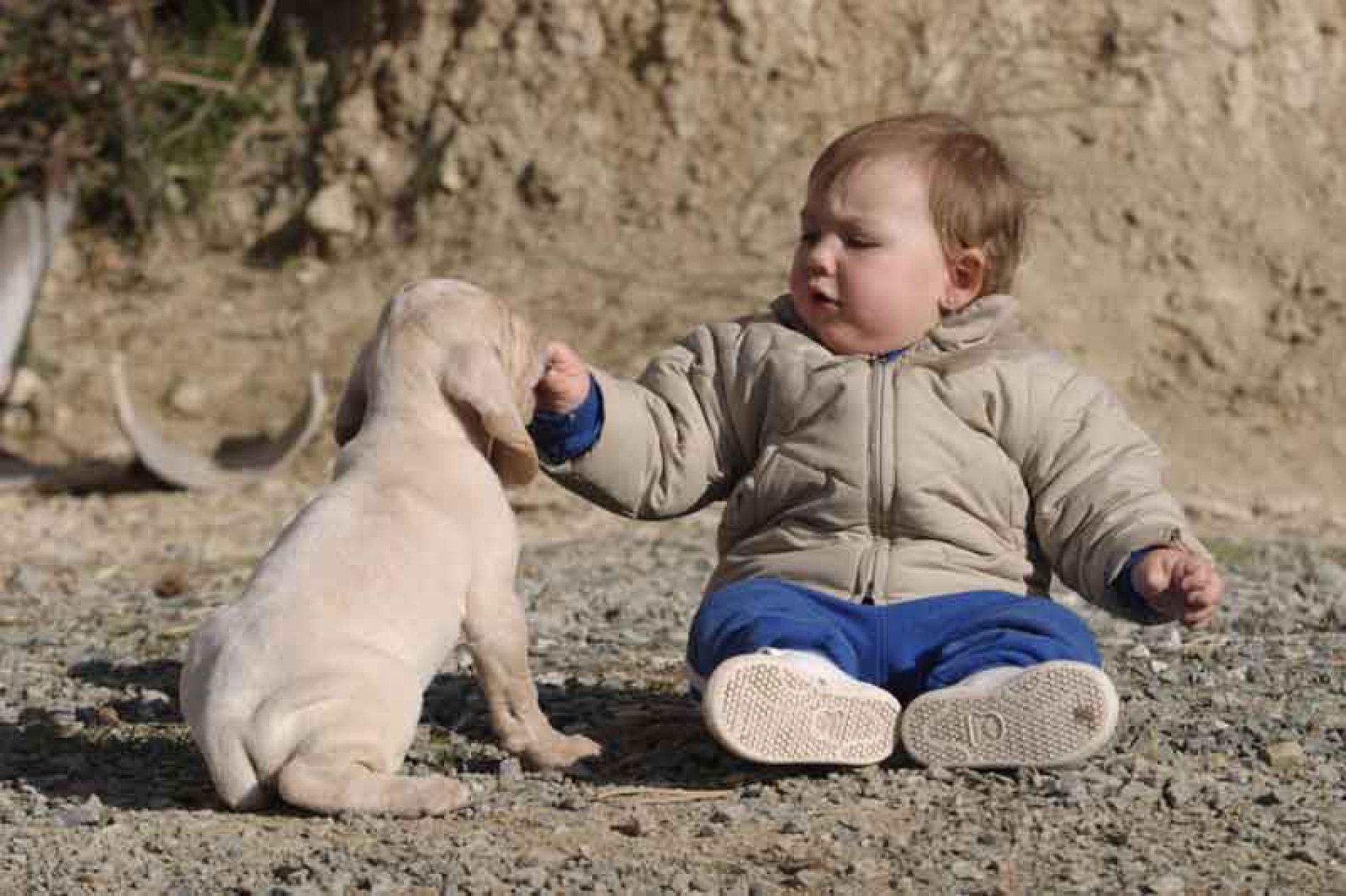 La sociabilización del perro de caza