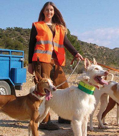 perros-de-caza-adiestramiento-la-zona-de-adiestramiento-para-eel-perro-de-caza-1