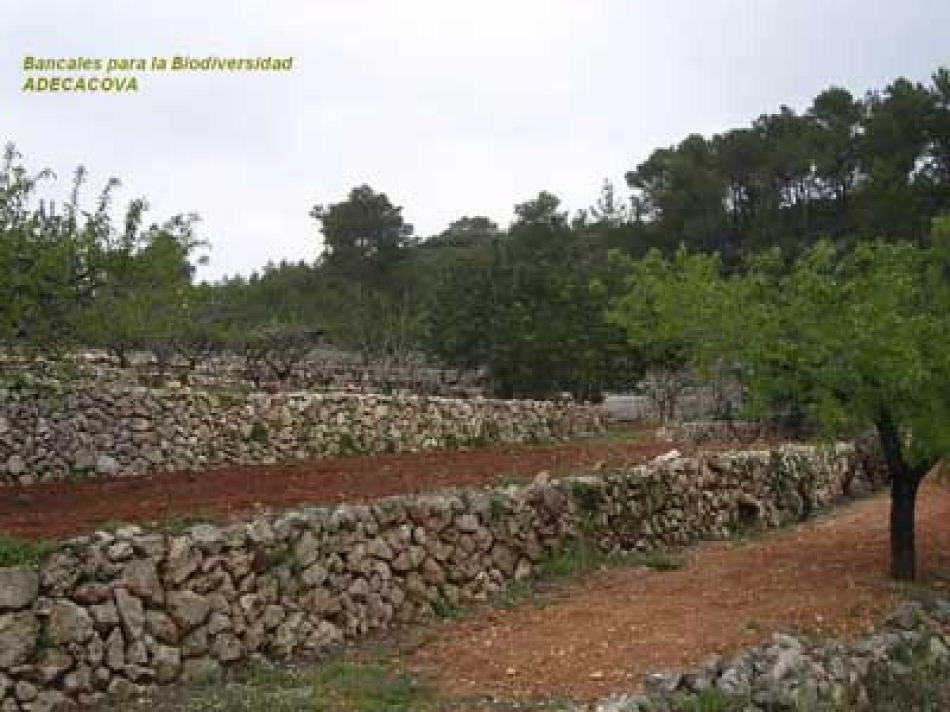 Europa tumba el Plan de Desarrollo Rural de la Comunidad Valenciana