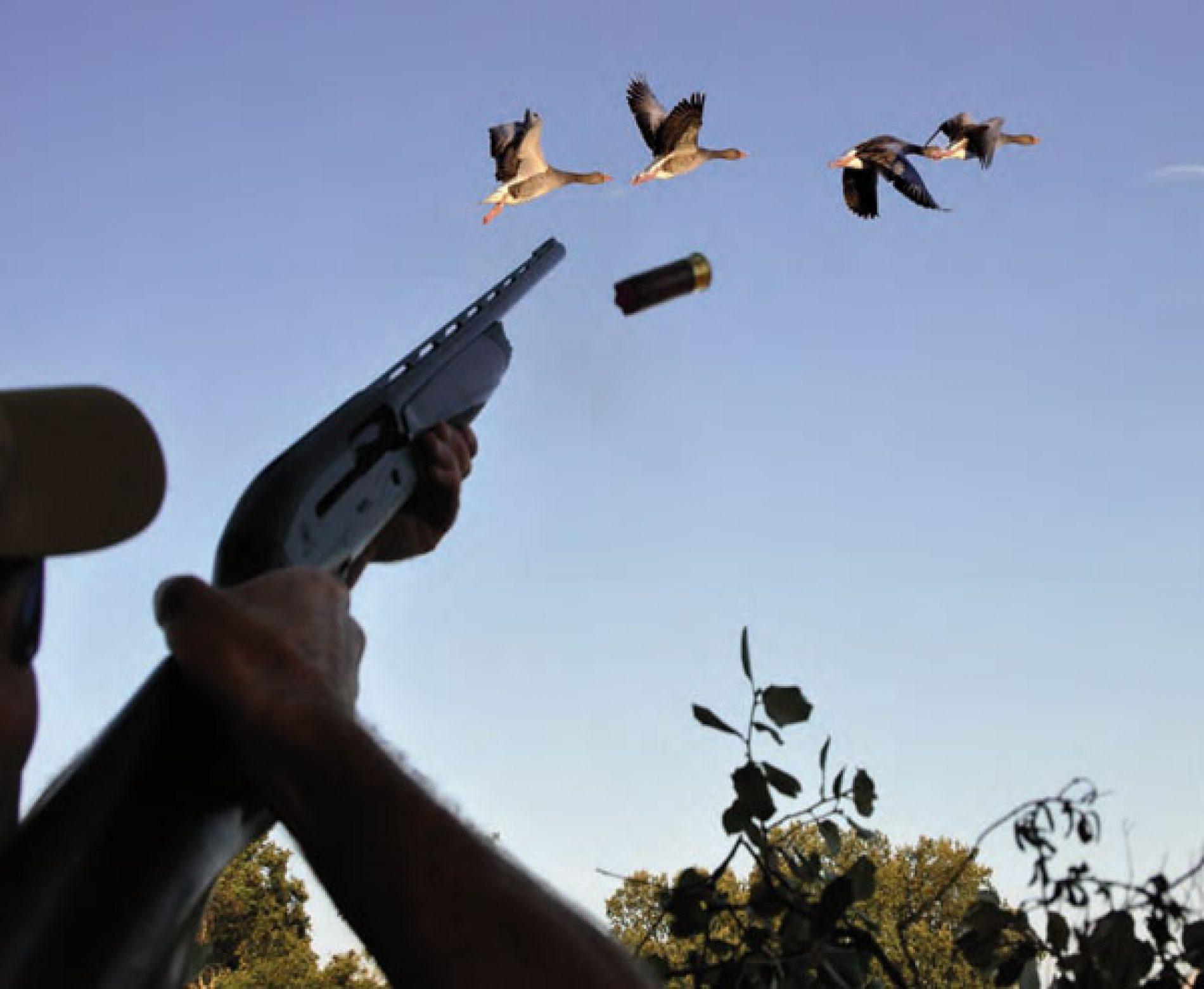 Ánsares en España. ¿Dónde y cómo cazarlos?