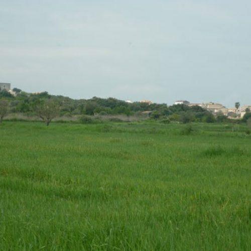 Primera Diada por los derechos de la caza en Mallorca