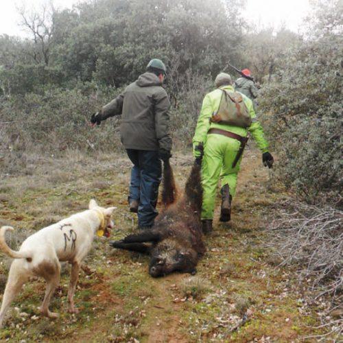 Seguimos monteando, con buen tiempo y abundante caza