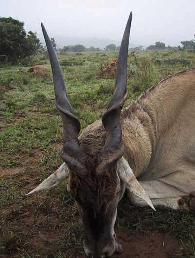 Los-4-espiralados-del-cabo-eland