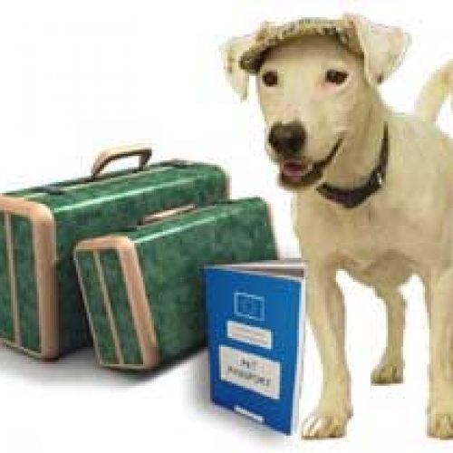 ADECACOVA denuncia las imposiciones de la Administración a los perros