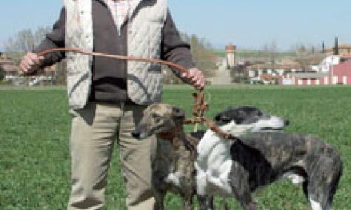 Galgos: Descontrol canino nacional