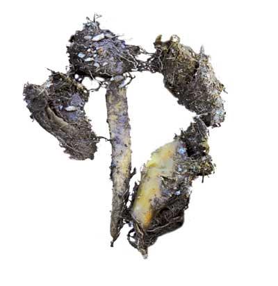 rastros-lobos-heces-huesos