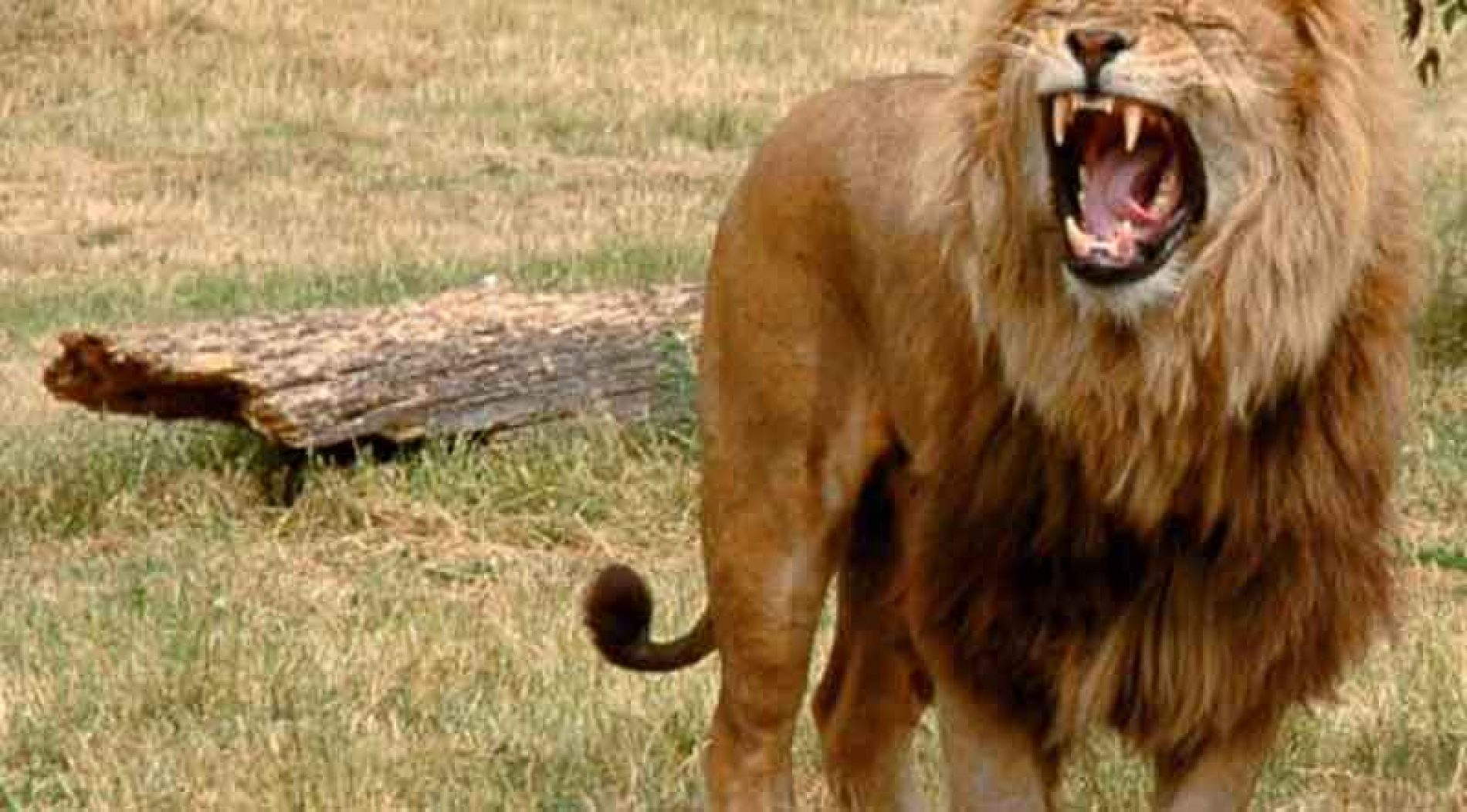 En CITES reconocen el papel de la caza en el desarrollo de zonas deprimidas