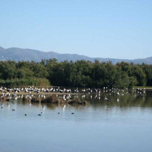 Consulta sobre las Directivas de Aves y Hábitats