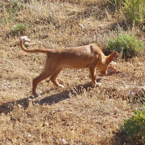 Los cazadores reclaman información sobre Ley de animales de compañía