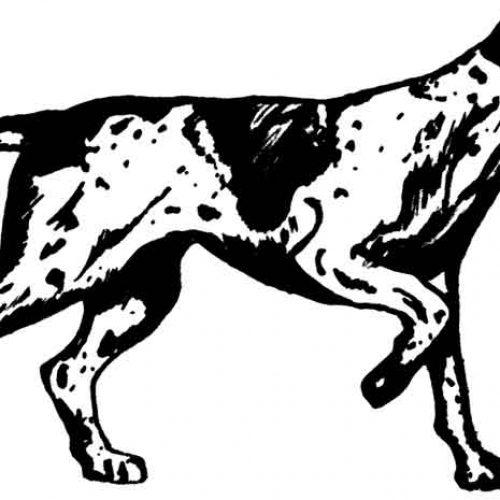 ¿Qué documentos tengo que llevar cuando cazo con mi perro?