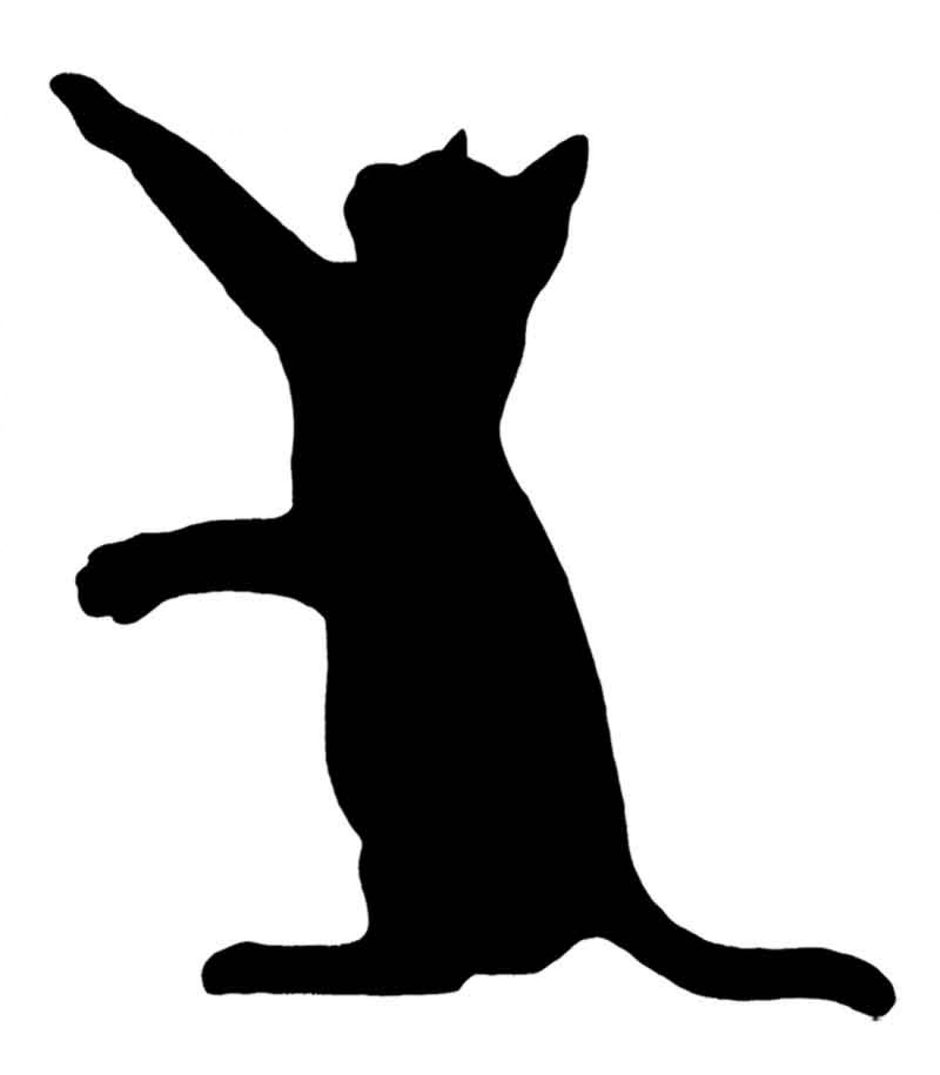 ¿Qué hacemos con los gatos asilvestrados?