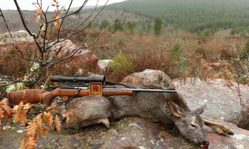 Gran éxito de las II jornadas de caza de corzas de Guadalajara