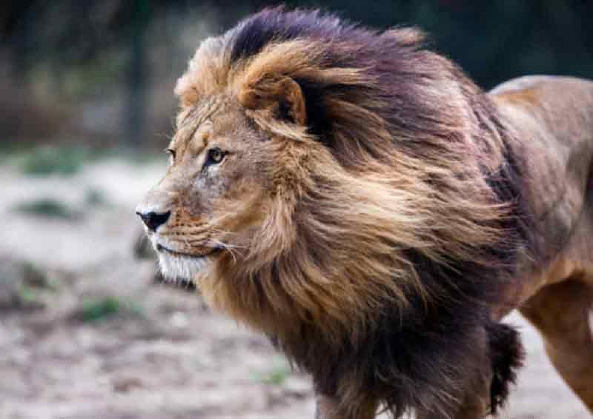 Universidades internacionales y gobiernos africanos defienden la caza