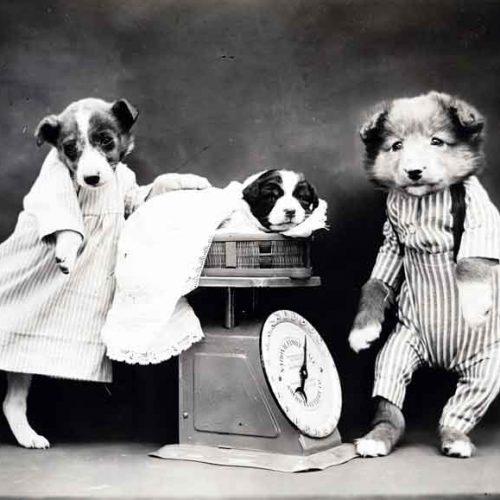 Perros, hombres y tontos