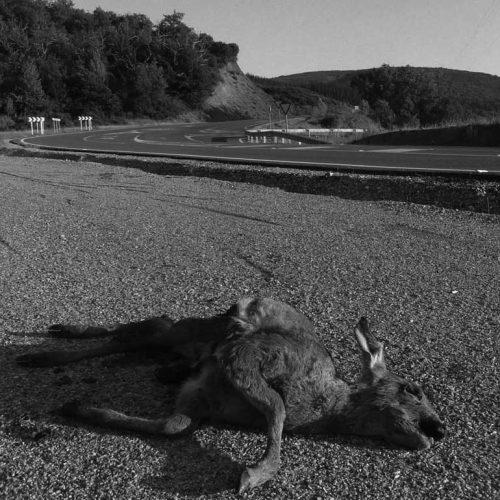 Accidentes provocados por especies cinegéticas ¿Quién es el responsable?