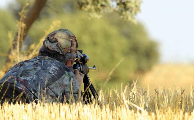 Armas-corzos-cultivos