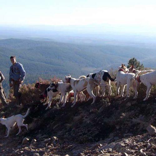 Crisis de la caza menor y buenos datos de caza mayor en Extremadura