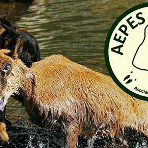 Cataluña regula el rastreo de animales con perros de sangre
