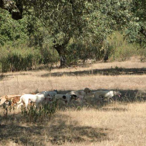 El convenio de protección de animales no ha entrado en vigor en España
