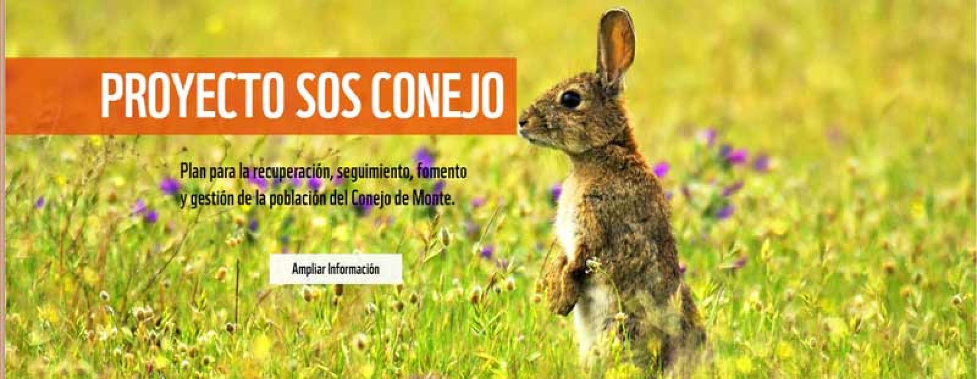 WWF propone una Estrategia Nacional para la gestión del conejo