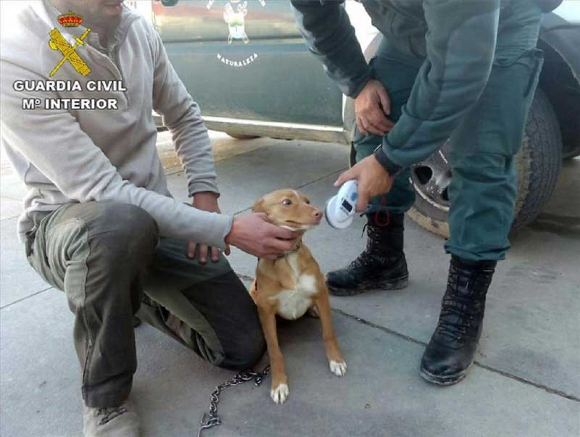 La AER agradece al Seprona la recuperación de 29 perros robados en Córdoba