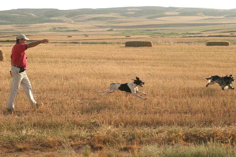 perros de caza adiestramiento aficion-perros-de-caza2